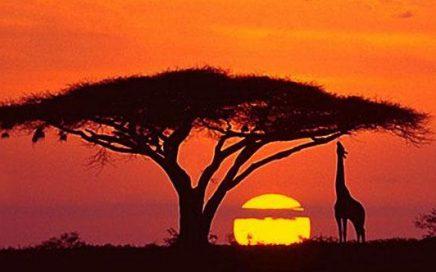 Nueva Web Educa Tanzania